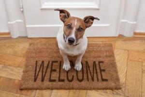 dogwelcome