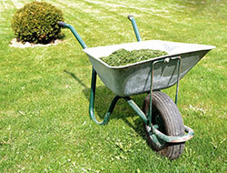 curb appeal late summer lawn care tree amp landscape service blog carpenter costin lawn care