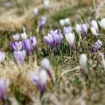 Preparing Your Home for Spring