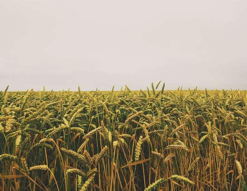 Lot, Land & Farm Listings
